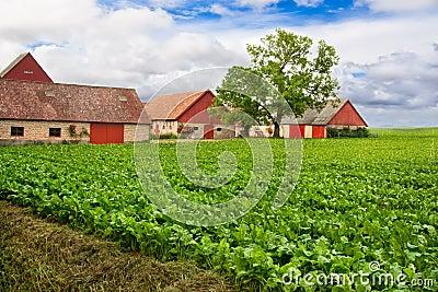 Vivid farmland