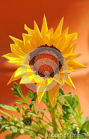 Vivid gerbera flower