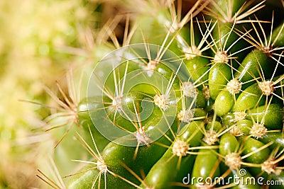 Vivid green grusonii cactus closeup shot