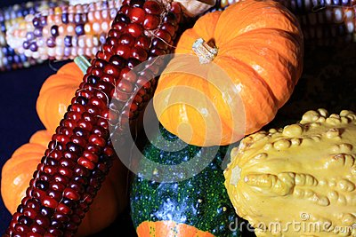 Vivid Harvest Colors
