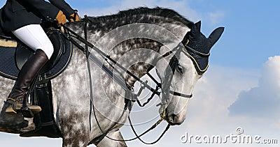 Vlek-grijs paard
