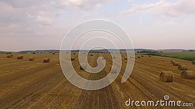 Vliegen over het veld tarwe of rogge met hooirietbalken Oogst landbouwlandbouwlandbouwlandbouwbedrijf landelijke lucht 4k video stock video