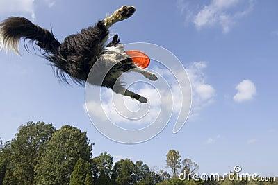 Vliegende hond