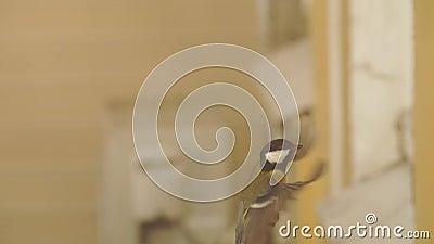Vlucht van kleine vogel stock footage