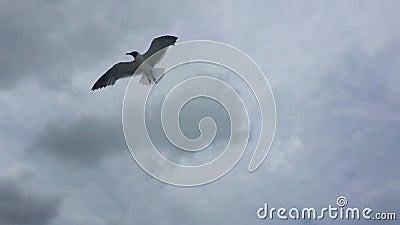 vogel stock video