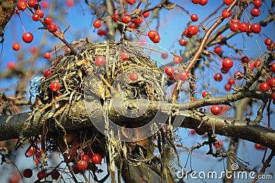 vogel nest im baum rote beeren stockfoto bild 47011923. Black Bedroom Furniture Sets. Home Design Ideas