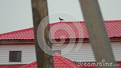 Vogel op het rode dak van het gebouw Herfst troebele dag stock footage