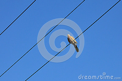 Vogel und blauer Himmel
