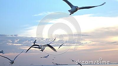 Vogels die op zee in zonsondergang langzame motie vliegen