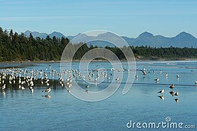 Vogels op strand
