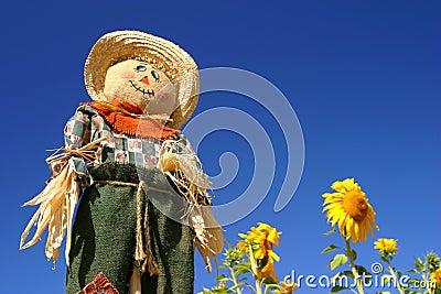 Vogelscheuche auf einem Sonnenblume-Gebiet
