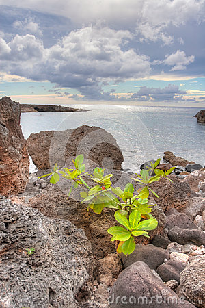 Volcanic ava rock by the ocean hawaii