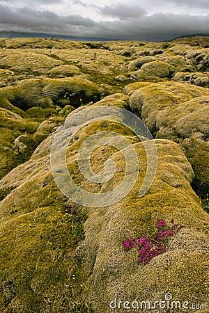 Volcanic lava, Iceland