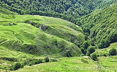 Volcanic plateau in Cantal