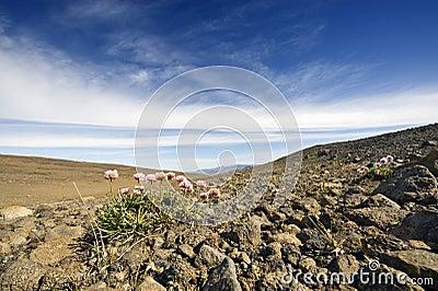 Volcanic Tundra Landscape