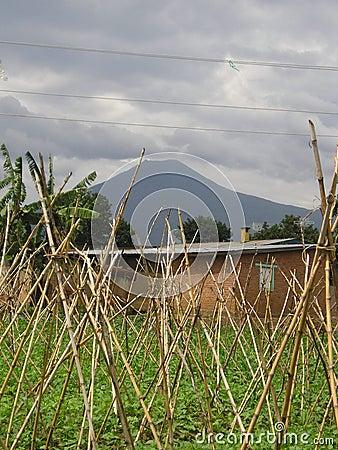 Volcano Rwanda Garden