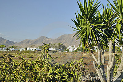 Volcanos on Lanzarote