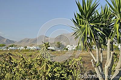 Volcanos on Lanzarote