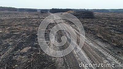 Voler au-dessus d'une forêt complètement brûlée de pin après un grand incendie de forêt - vue aérienne banque de vidéos