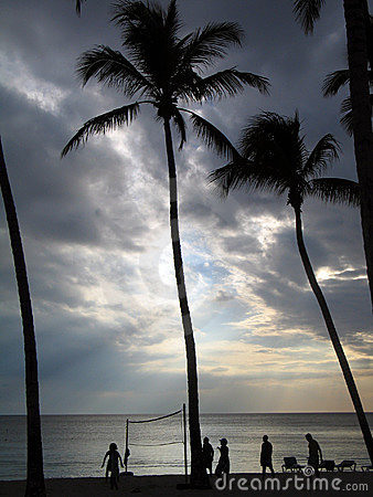 Volleyball under the palms