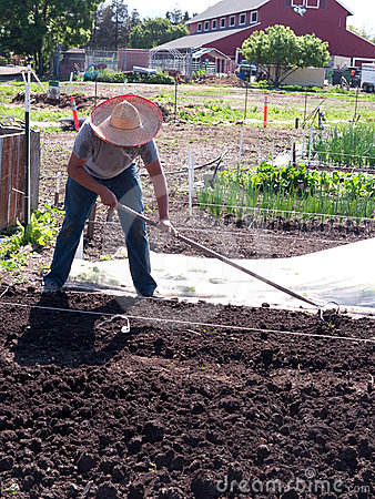 Volunteer  preparing soil at community farm Editorial Stock Photo