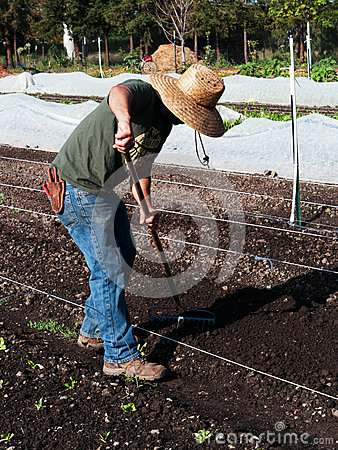 Volunteer  preparing soil at community farm Editorial Stock Image