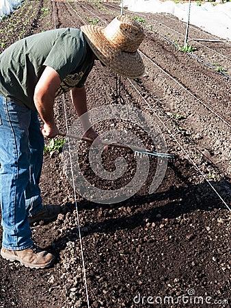 Volunteer  preparing soil at community farm Editorial Photography