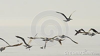 Voo das gaivotas vídeos de arquivo