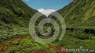 Voo a drone cinemático em direção à cascata no final do lindo canyon verde montanhas, bacia de serenidade com palmas tropicais video estoque