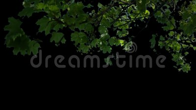 Vordergrundbäume, die im Wind mit Matt-V1 durchbrennen stock footage