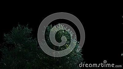 Vordergrundbäume, die im Wind mit Matt-V4 durchbrennen stock video