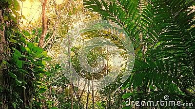 Voyage par des roches de jungle dans la lueur de Sun banque de vidéos
