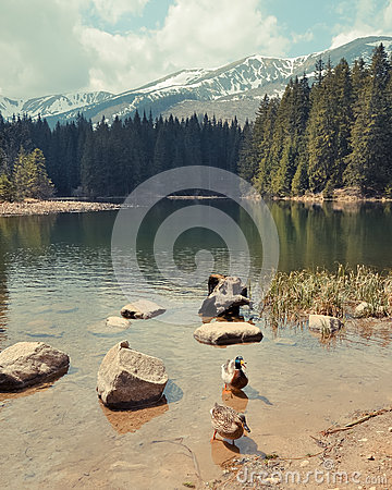 Free Vrbicke Lake In Tatra Mountains. Slovakia Royalty Free Stock Image - 31352166