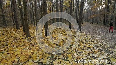 Vrouw die door Autumn Forest lopen stock footage