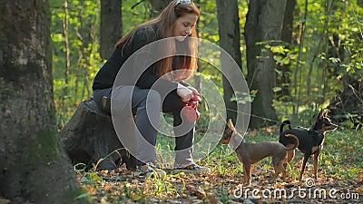 Vrouw met rode haarzitting in een bos op een stomp en liefkozingen twee kleine honden stock videobeelden