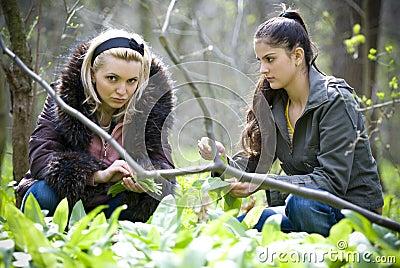 Vrouwen die bladeren plukken