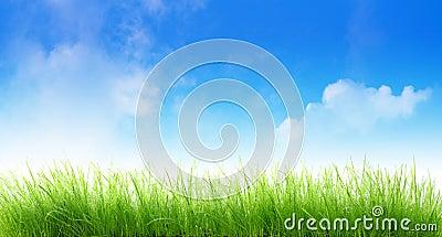 Vått gräs