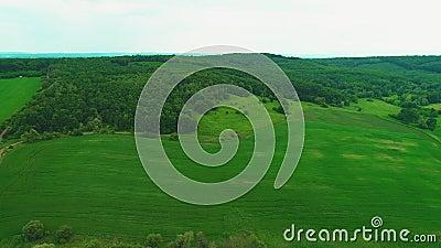 Vue aérienne, entourant au-dessus des champs verts vifs L'espace trapu de copie de forêt 4K clips vidéos