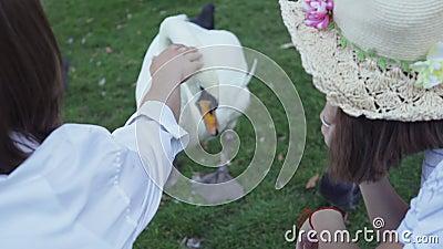 Vue arrière d'un jeune homme et d'une femme nourrissant un beau cygne blanc Connexion avec la nature Vie rurale, vie de village banque de vidéos
