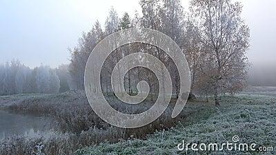 Vue de l'allée de bouleau dans le gel brumeux Petrovskoye, Pushkinskie d'octobre sanglant Russie banque de vidéos