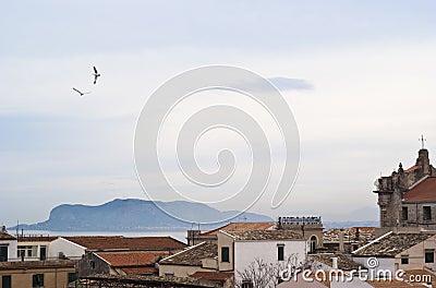 Vue de Palerme avec des toits et des mouettes
