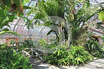 Palmier en serre chaude photo libre de droits image 30259445 - Petit jardin avec palmier strasbourg ...