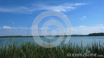 Vue par les roseaux sur un grand lac au-dessus duquel le ciel bleu Horizontal normal banque de vidéos