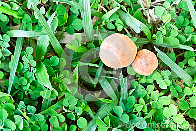 Vue supérieure de champignon