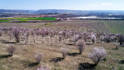 Vue sup?rieure des champs fleurissants des arbres agricoles projectile Fleur a?rienne de Sakura de fleurs de cerisier de vue sup? clips vidéos