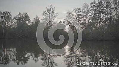 Vue sur la végétation d'une rivière depuis un bateau banque de vidéos