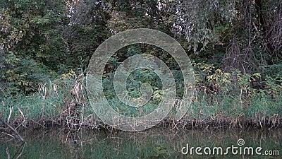 Vue sur la végétation d'une rivière depuis un bateau clips vidéos