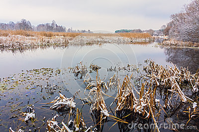 Vue sur le marais. Herbe et eau.