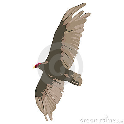 Vulture with clipping path