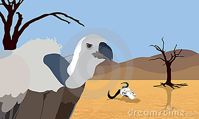 Vulture in desert